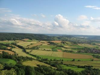 einkorn fields